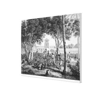グアムの島: tの庭の仕事の先住民 キャンバスプリント