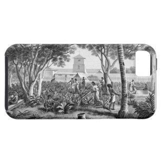 グアムの島: tの庭の仕事の先住民 iPhone SE/5/5s ケース