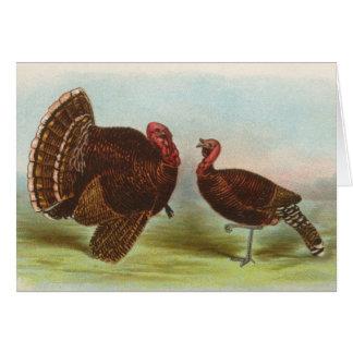 グラハム-青銅色の七面鳥 カード