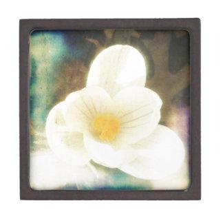 グランジなクロッカスの花 ギフトボックス