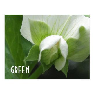 グリーンピースのエンドウ豆の花のカスタムなテンプレートの郵便はがき ポストカード