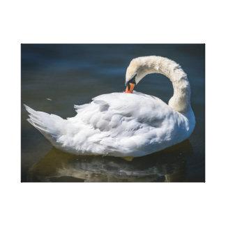 グルーミングの白鳥のキャンバスのプリント キャンバスプリント