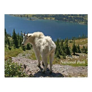 グレーシャー国立公園のマウンテンゴート ポストカード