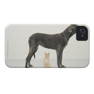 グレートデーンの下に坐っている猫 Case-Mate iPhone 4 ケース