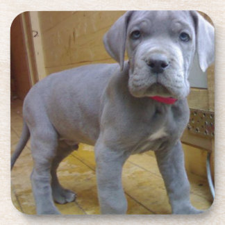 グレートデーンの子犬の青 コースター