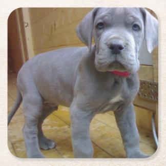 グレートデーンの子犬の青 スクエアペーパーコースター