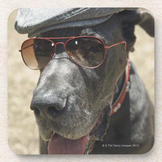 グレートデーンの身に着けている帽子およびサングラス コースター