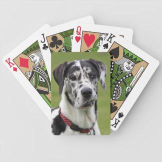 グレートデーン犬のおもしろいな顔の美しい写真のポートレート バイスクルトランプ