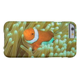 グレート・バリア・リーフのかわいいClownfish Barely There iPhone 6 ケース