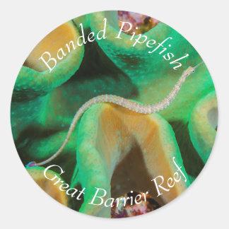 グレート・バリア・リーフのバンドを付けられたPipefish ラウンドシール