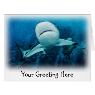 グレート・バリア・リーフの礁の鮫 カード