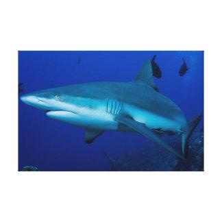グレート・バリア・リーフの礁の鮫 キャンバスプリント
