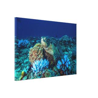 グレート・バリア・リーフの素晴らしいウミガメ キャンバスプリント