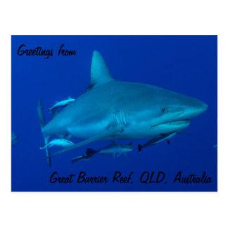 グレート・バリア・リーフの郵便はがきの礁の鮫 ポストカード