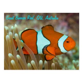 グレート・バリア・リーフの郵便はがきのClownfish ポストカード