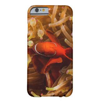 グレート・バリア・リーフのSpinecheek Anemonefish Barely There iPhone 6 ケース