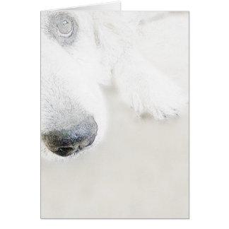 グレート・ピレニーズの穏やかな巨人 カード