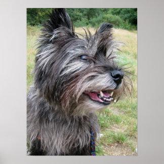 ケアーン・テリア犬ポスター、プリント、ギフトのアイディア ポスター