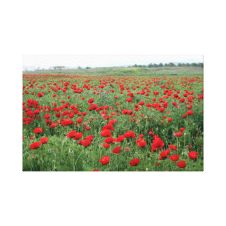 ケシ分野の自然の景色の赤の花 キャンバスプリント