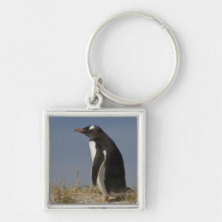 ケッペルのGentooのペンギン(Pygoscelisパプア) キーホルダー