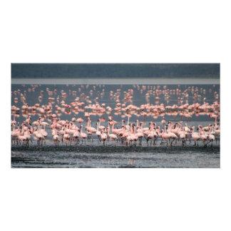 ケニヤの湖Nakuruのフラミンゴ カード