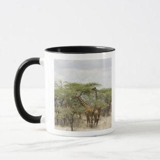 ケニヤのSamburuの国立保護区。 Rothschild マグカップ
