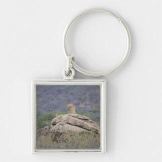 ケニヤのSamburuのSIZEN HOGO、メスのライオン キーホルダー