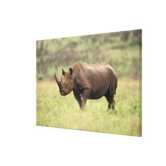 ケニヤ、ナイロビの国立公園。 クロサイ キャンバスプリント