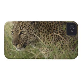 ケニヤ、マサイ族のマラのゲームの予備。 アフリカのヒョウ2 Case-Mate iPhone 4 ケース