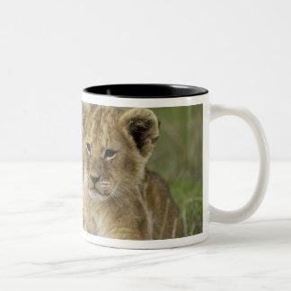 ケニヤ、マサイ族のマラのゲームの予備。 アフリカのライオン ツートーンマグカップ