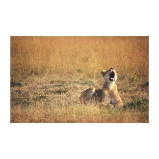 ケニヤ、マサイ族のマラの国立保護区、雌ジシ キャンバスプリント