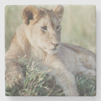 ケニヤ、マサイ語マラのライオンの子のモデル ストーンコースター