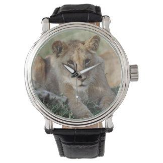ケニヤ、マサイ語マラのライオンの子のモデル 腕時計