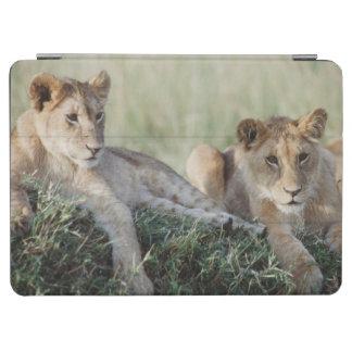 ケニヤ、マサイ語マラのライオンの子のモデル iPad AIR カバー