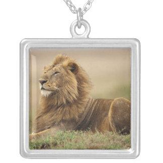 ケニヤ、マサイ語マラ。 シロアリの成人男子のライオン シルバープレートネックレス