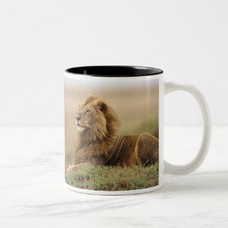 ケニヤ、マサイ語マラ。 シロアリの成人男子のライオン ツートーンマグカップ