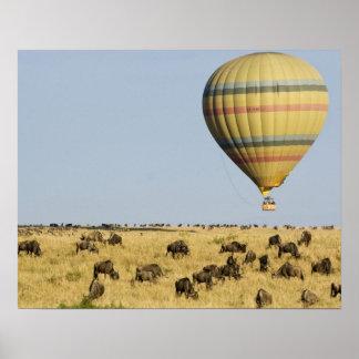 ケニヤ、マサイ語マラ。 観光客は熱気の気球に乗ります ポスター