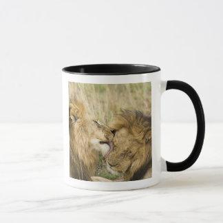 ケニヤ、マサイ語マラ。 1頭のオスのライオンのクローズアップ マグカップ