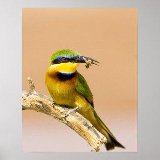 ケニヤ。 肢の小さい蜂食べる人の鳥のクローズアップ ポスター