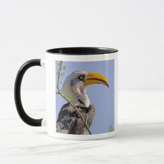 ケニヤ。 黄色勘定書を出されたミナミジサイチョウの鳥のプロフィール マグカップ