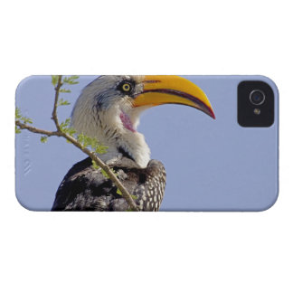 ケニヤ。 黄色勘定書を出されたミナミジサイチョウの鳥のプロフィール Case-Mate iPhone 4 ケース