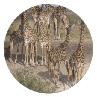 ケニヤ: 1ダースのマサイ族のマラのゲームの予備の群れ パーティー皿