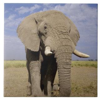 ケニヤ: Amboseliの国立公園、男性象 タイル