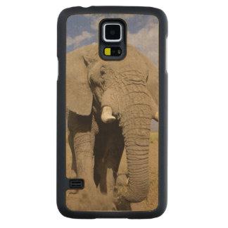 ケニヤ: Amboseliの国立公園、男性象 CarvedメープルGalaxy S5スリムケース