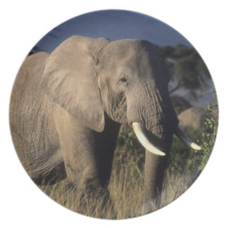 ケニヤ: Amboseliの男性のアフリカゾウ ディナープレート