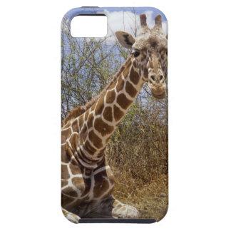 ケニヤ: Laikipiaのプラトー、Loisabaの荒野 iPhone SE/5/5s ケース
