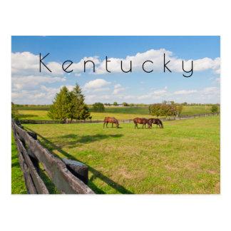 ケンタッキーの郵便はがき、馬の農場の馬 ポストカード