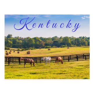 ケンタッキーの郵便はがき。 馬の農場の馬 ポストカード