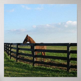 ケンタッキーBluegrassの馬場面 ポスター