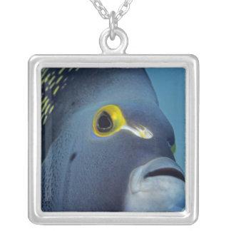 ケーマン諸島のフランスのなAngelfishのPomacanthus シルバープレートネックレス
